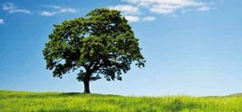 Salvaguardia dell'ambiente